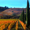 Ferrari Carano Winery, Autumn Landscape