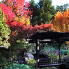 Ferrari Carano Winery, Gazebo with Fall Foliage
