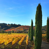 Ferrari-Carano Winery, Golden Vines and Cypress