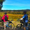 Wine Country Bikes, Martorana Winery