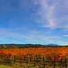 Quivira Vineyards, Panorama of Autumn Vineyards