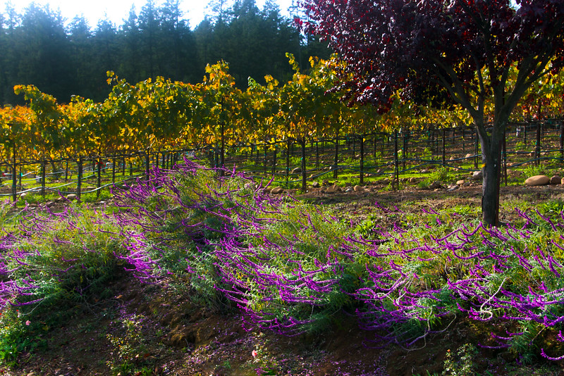 Dry Creek Valley, Autumn Colors on Wine Country Bikes Tour
