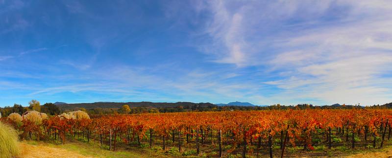 Quivira Vineyards, Panorama of Autumn Vineyards