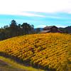 Trattore Farms, Sonoma