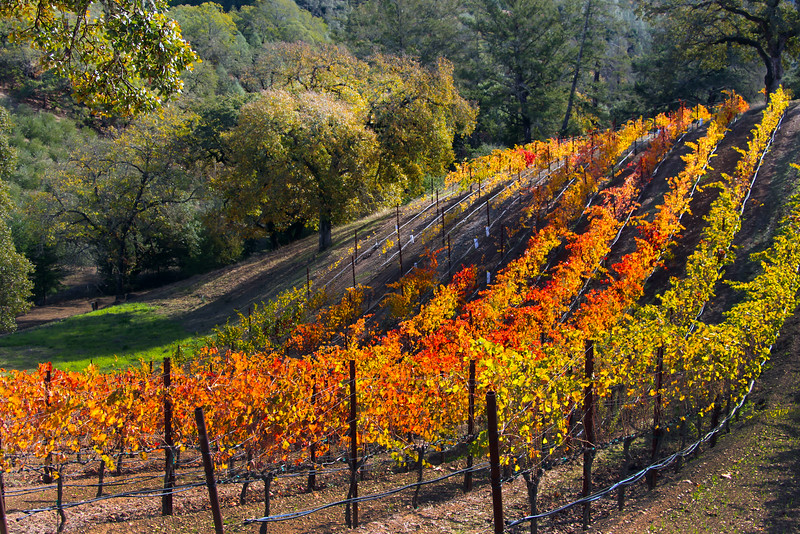 Trattore Farms Vineyards