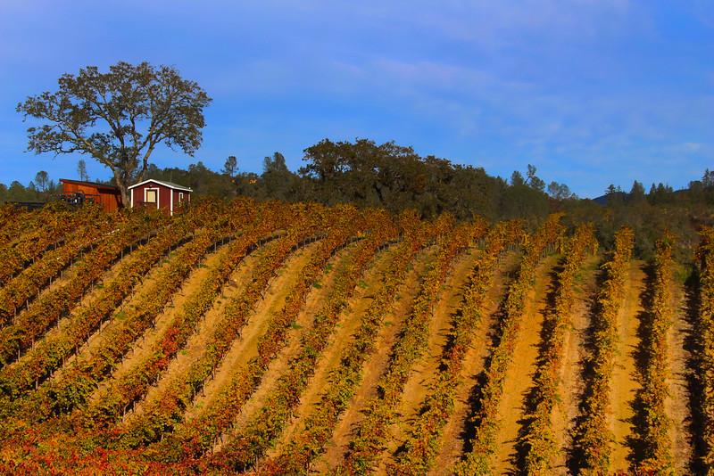 Alexander Valley Vineyards