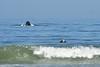 Humpback whale, Oceano Dunes Beach CA (8)