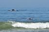 Humpback whale, Oceano Dunes Beach CA (10)