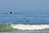 Humpback whale, Oceano Dunes Beach CA (9)