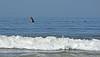 Humpback whale, Oceano Dunes Beach CA (13)