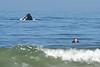 Humpback whale, Oceano Dunes Beach CA (7)