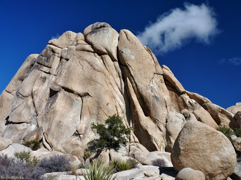 'Terradactyl Rock' I