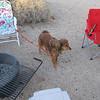 Ruby, Kathi's sweet canine companion