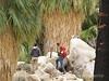 49 Palms Oasis trail, Joshua Tree NP CA (10)