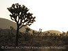 Hidden Valley, Joshua Tree NP CA (13)