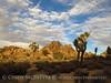 Hidden Valley Trail, Joshua Tree NP CA (1)