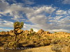 Hidden Valley Trail, Joshua Tree NP CA (4)