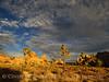 Hidden Valley Trail, Joshua Tree NP CA (10)