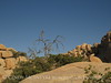 Barker Dam Trail, Joshua Tree NP CA (13)