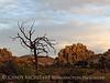 Hidden Valley Trail, Joshua Tree NP CA (45)