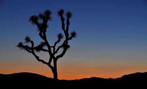 Joshua Tree National Park - Night Shots