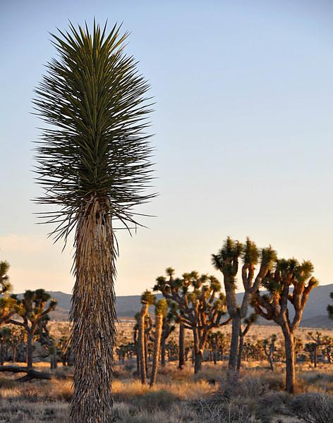 Joshua Tree national park has desert like features.