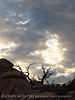 Hidden Valley Trail, Joshua Tree NP CA (44)