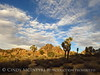 Hidden Valley Trail, Joshua Tree NP CA (3)