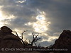 Hidden Valley Trail, Joshua Tree NP CA (43)