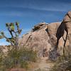 Rock and Rock Climber