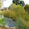 Kyoto Gardens - 15