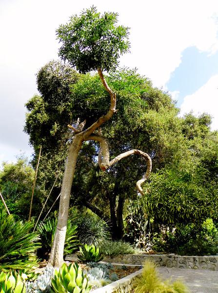 Arboretum - 4