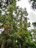 Arboretum - 10