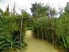 A Weaver's Garden path