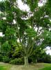 Arboretum - 19