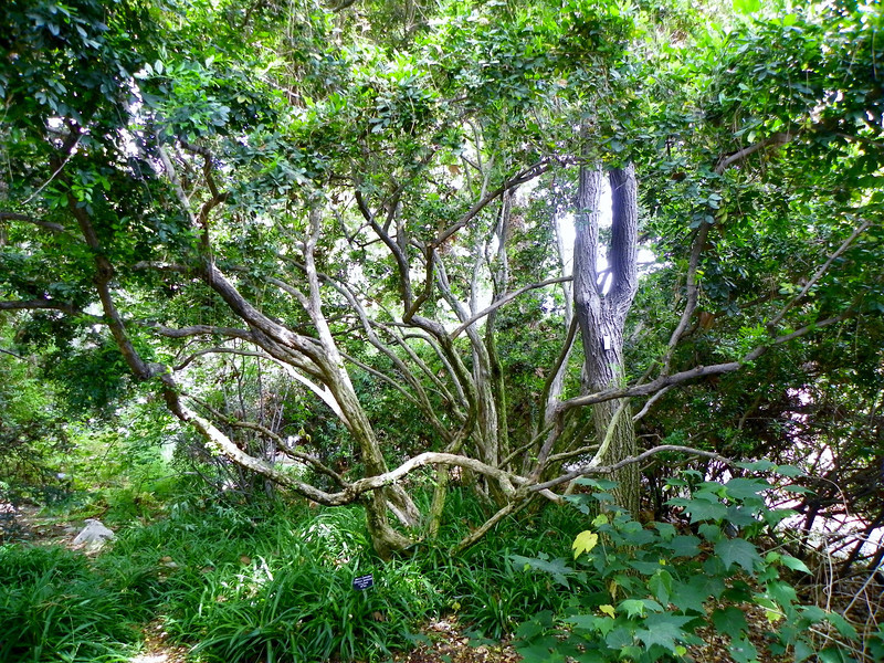 Arboretum - 9