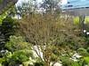 Japanese Garden - 8