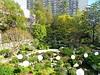 Japanese Garden - 1