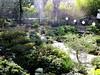 Japanese Garden - 7