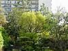 Japanese Garden - 9