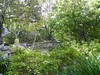 Japanese Garden - 3