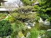Japanese Garden - 20