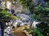 Japanese Garden - 6