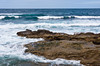 Seal pups and females haul out at the beach in La Jolla, California, USA.