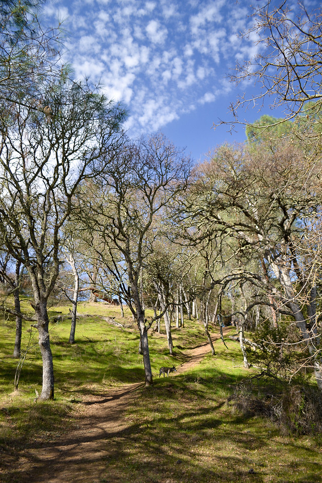 Jazz on the path  - Lichen Bark side of Del Valle