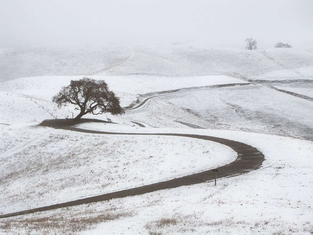 The old oak at the top of the hill - Snow in Livermore December 2009.    You are gone.   You would have so loved to see this, to have been a part of it.   I can only hope your spirit lingers here, that somehow, it is aware, it does share in the experience in some way I can neither understand, nor be aware of.  (EBRP-Del Valle)
