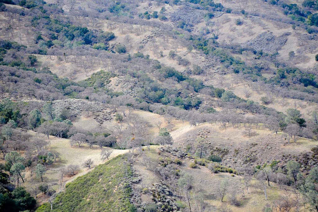 Hillsides of Del Valle.