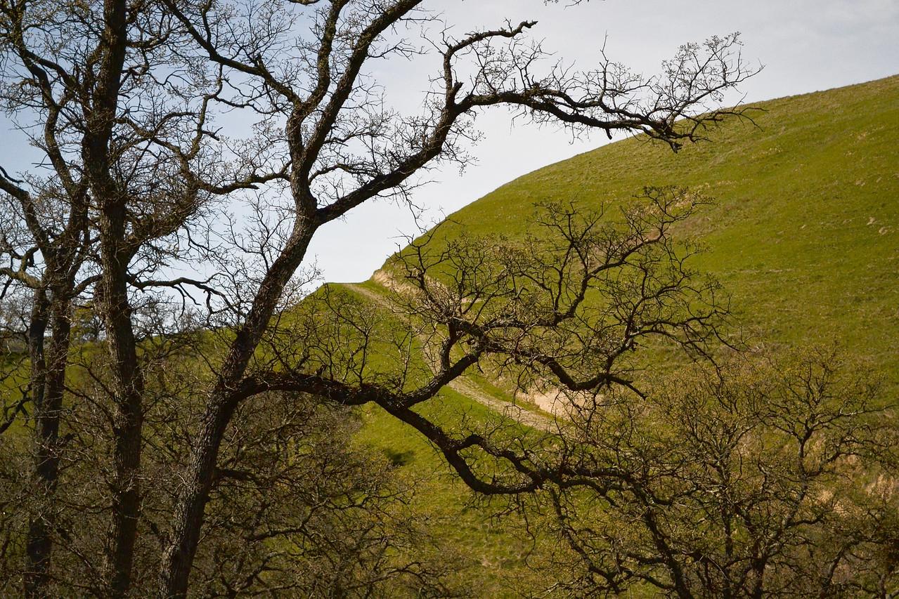 EBRP - Del Valle. High Hill on Eagle Crest Trail