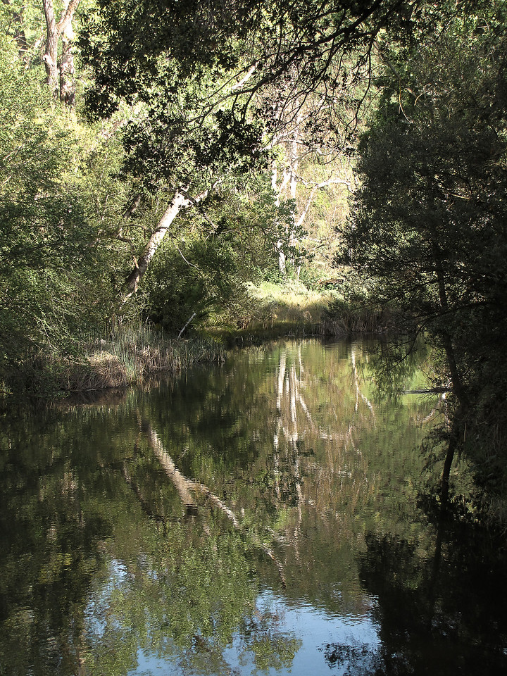 EBRP - Del Valle  - Springtime at the creek - Into the Light 2