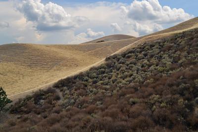 RH Creek Trail View